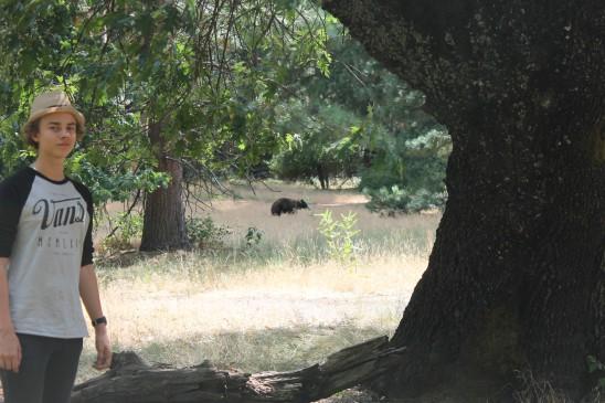 Björn i Yosemite